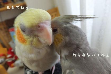 20110618nakayosi2.jpg