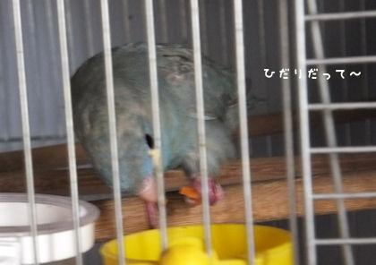 20110713yasai2.jpg