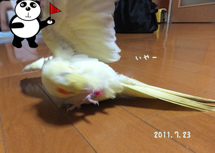 20110722natu3.jpg