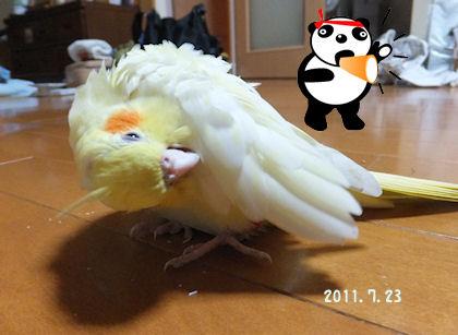 20110722natu4.jpg