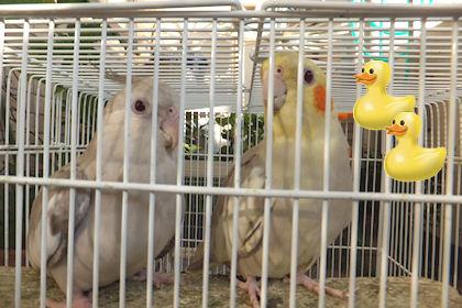 20110724ohisama3.jpg
