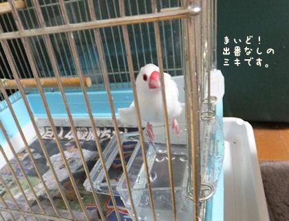 20110813miki.jpg