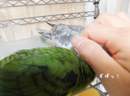 20110825marimo4.jpg