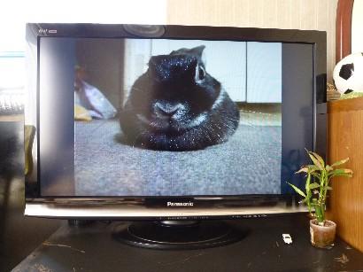 テレビシオン