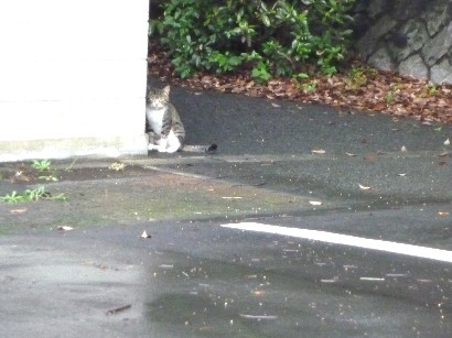 トヨタの猫さん