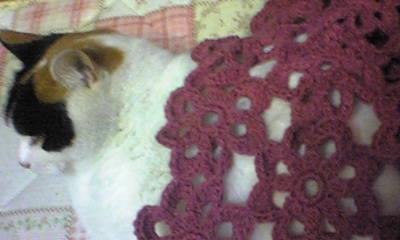 そばで寝てた猫にかぶせて・・・と。よく見ると起きてて横目でちら見してるしw