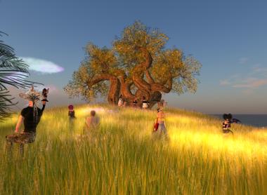 草原のライブ