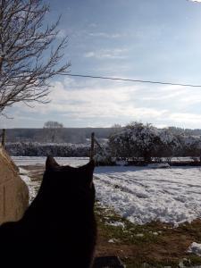 puma et neige