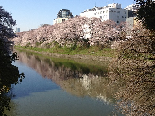 chidorigafuchi2012-1.jpg