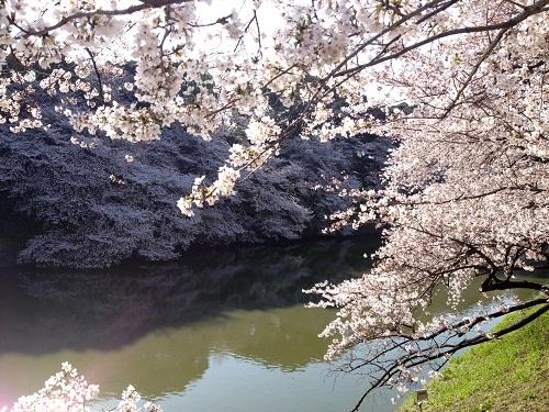 chidorigafuchi2012-2.jpg