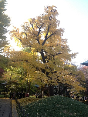 kuhonbutsu2012-1.jpg