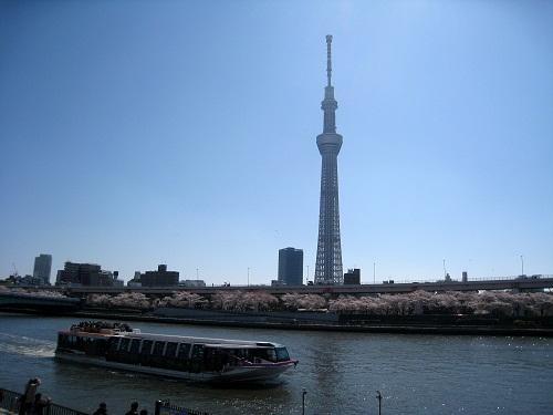 skytree_sakura2012-1.jpg