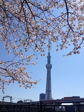 skytree_sakura2012-2.jpg
