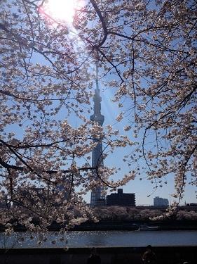 skytree_sakura2012-3.jpg