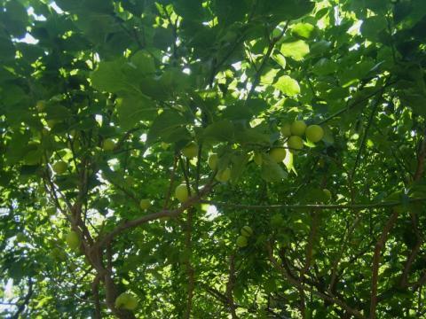 梅雨の晴れ間に新緑を