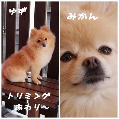 yuyu.jpg