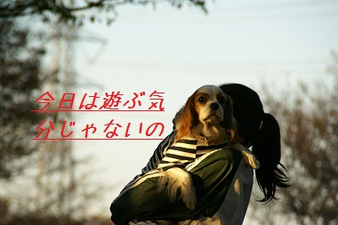20091123 抱っこベック