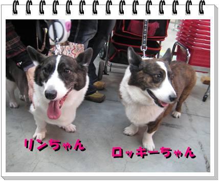 リン&ロッキーちゃん