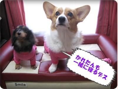 スミたんソファ withかれん