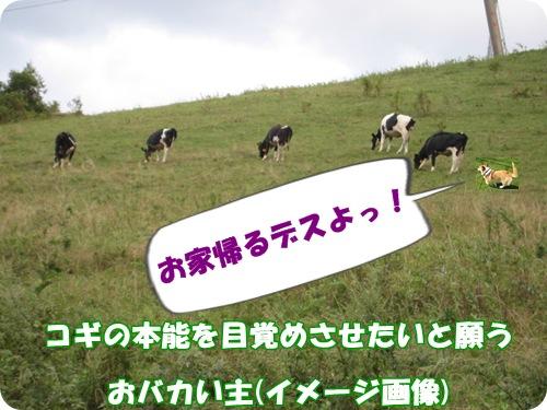 牛追いスミたん