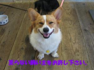 IMG_2357_convert_smile2.jpg