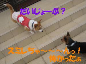 IMG_2972_convert_20120117232333.jpg