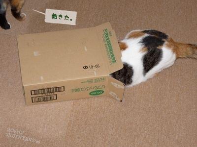 新しい猫さんがやってくる