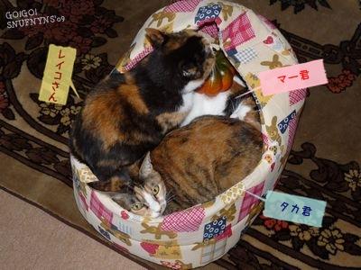 猫さん団子