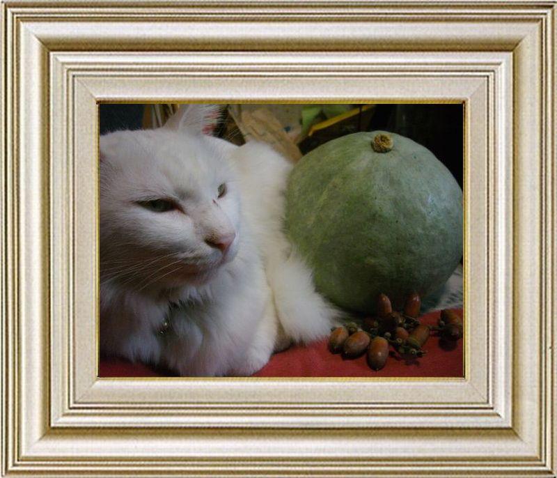 ねこ 猫 ハロウィン祭り 20番