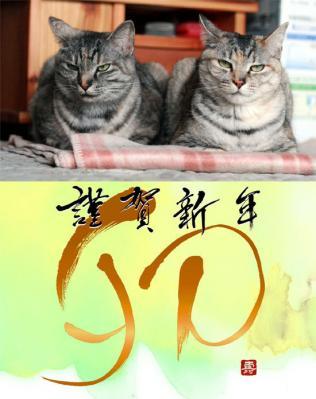 2012年用  猫2 年賀状WEB用のコピー