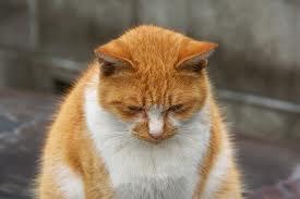 こ#12441;めん猫