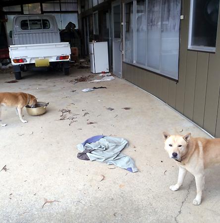 福島孤独犬