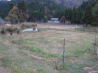 20091024生杉 017
