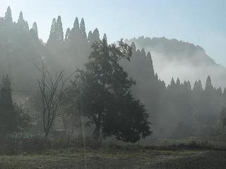 20091031生杉 031