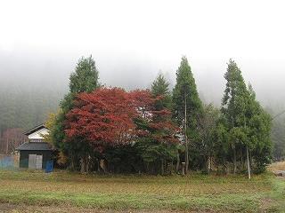 20091107生杉 020