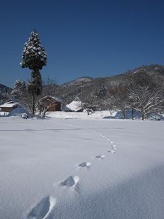 20100117生杉 058