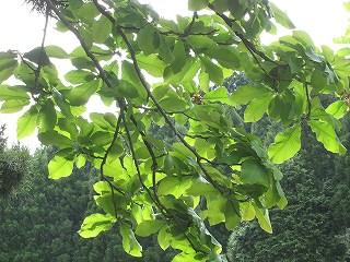 20100529-30生杉 059