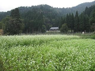 20101003生杉 022