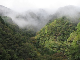 20101025生杉 003