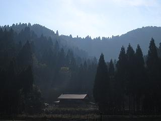 20101107生杉 027