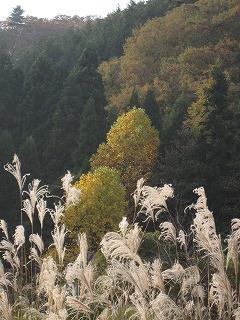 20101107生杉 038