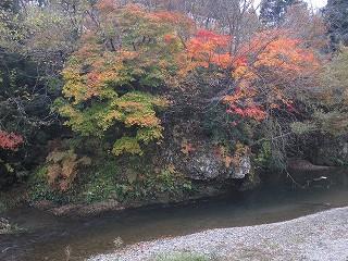 20101113,14生杉 066