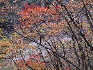 20101113,14生杉 061