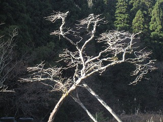 20101202生杉 002