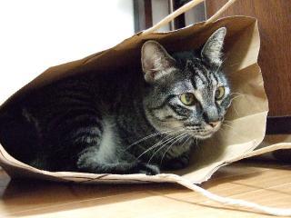 2009_1020cats0003.jpg