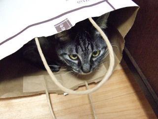2009_1020cats0004.jpg