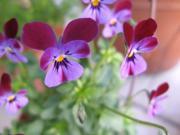 2009-11flower2.jpg