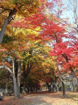 iwate-park (2)