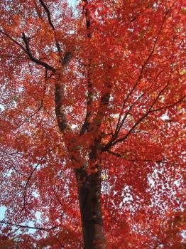 iwate-park (3)