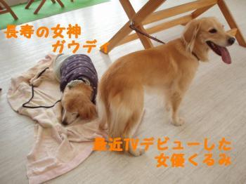 3-wan (3)